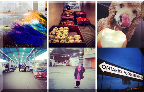 Ontario Food Terminal Board collage of popular photos