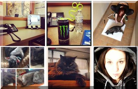 Guildcrest Cat Hospital collage of popular photos